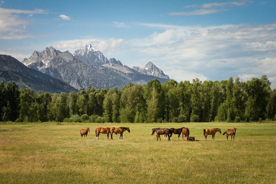 troupeau de chevaux au pied de la montagne