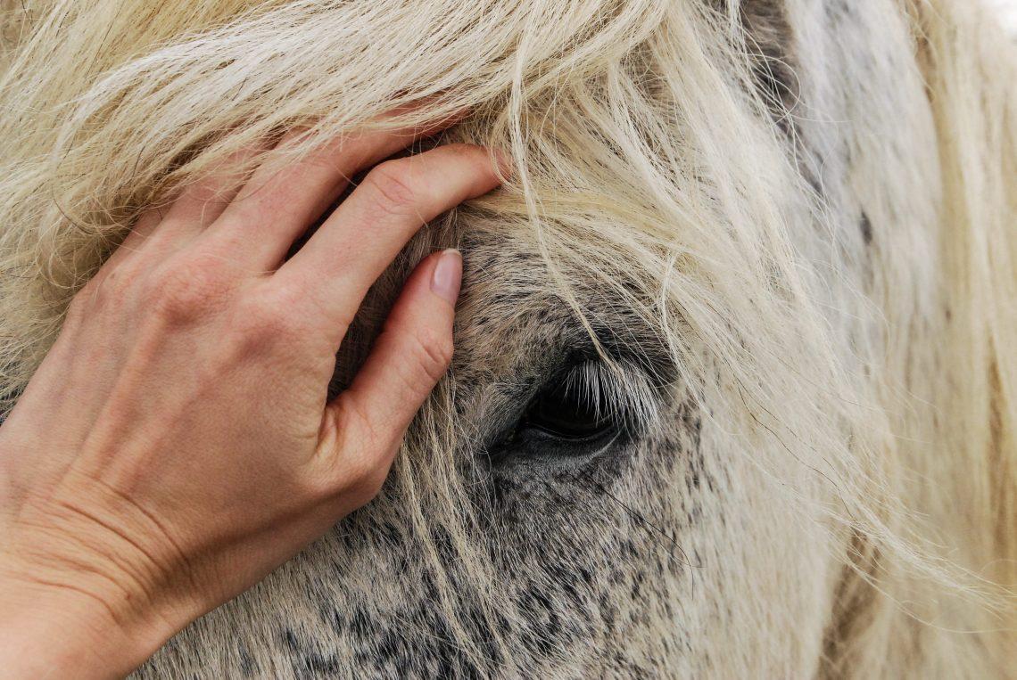 main posée sur tête de cheval
