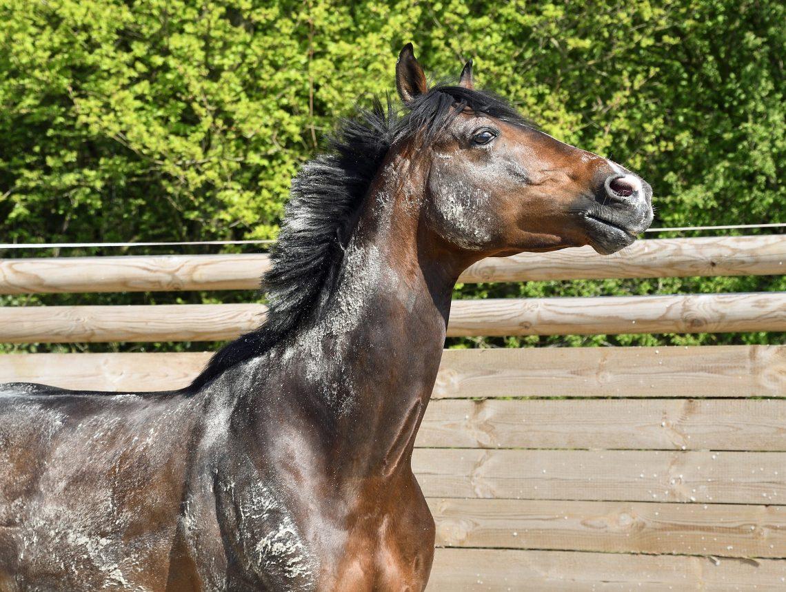 cheval inquiet