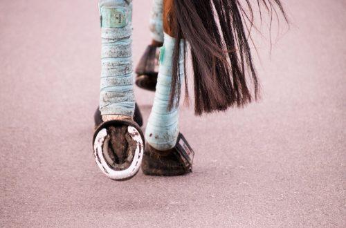 postérieurs de cheval bandé