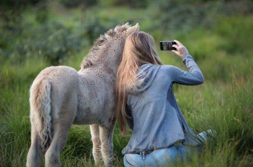 poulain et jeune fille qui regardent un smartphone
