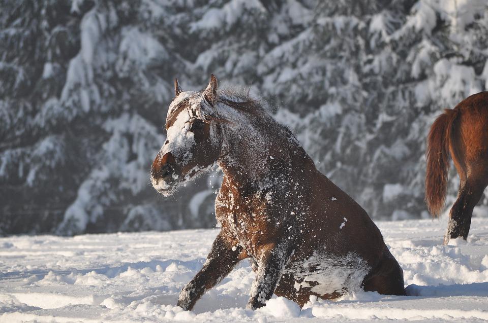 cheval dans la neige