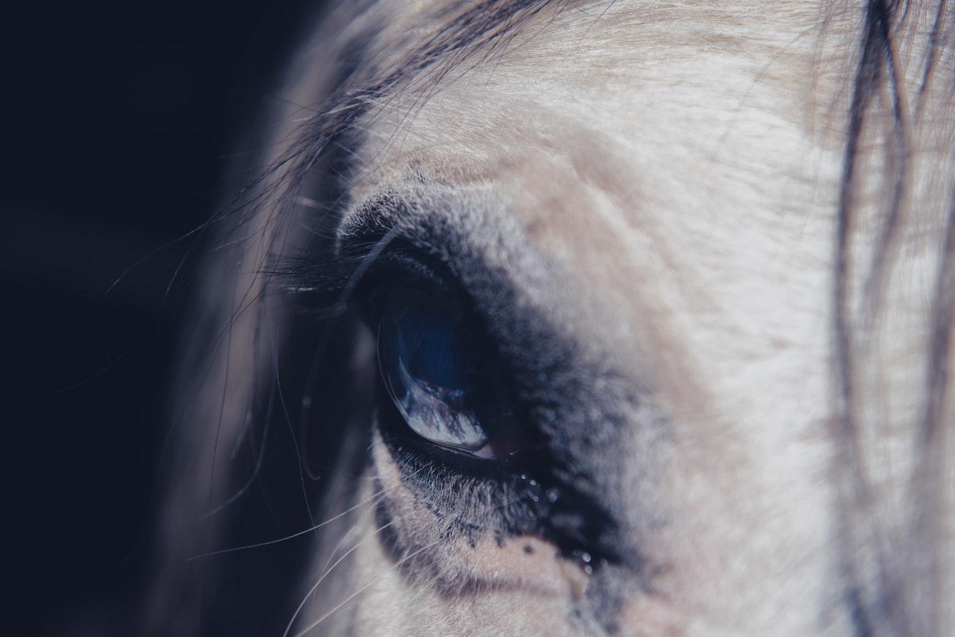 Le cheval : bête ou intelligent ? | À fleur de crins
