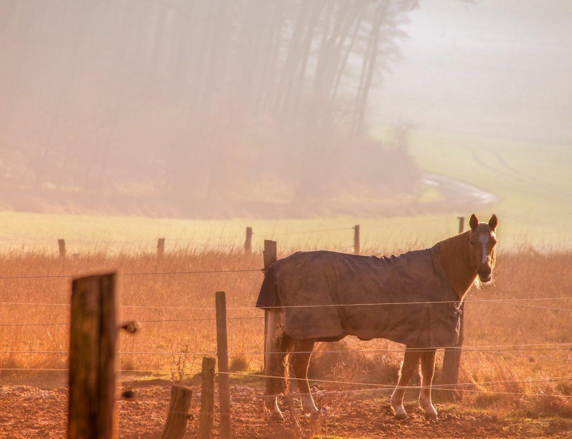 cheval dans le brouillard avec couverture