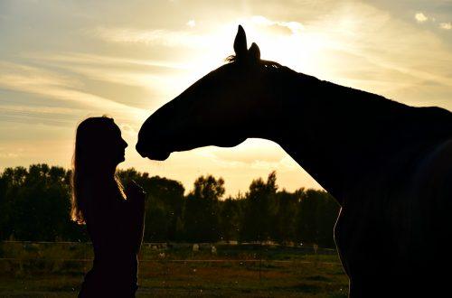 femme et cheval au coucher de soleil