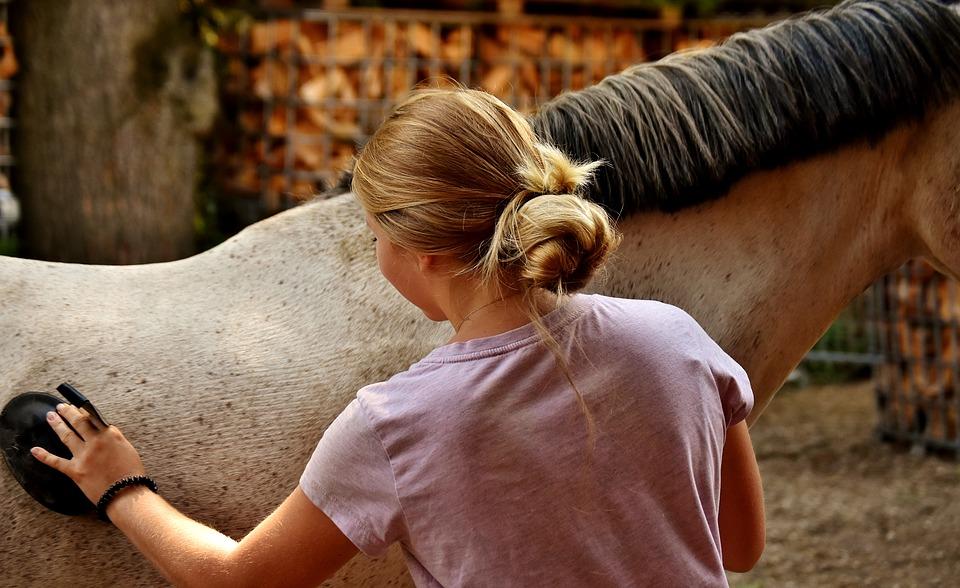 Pansage de cheval